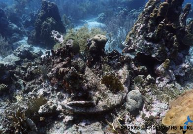 Anchor in the coral - Mangel Halto - Aruba