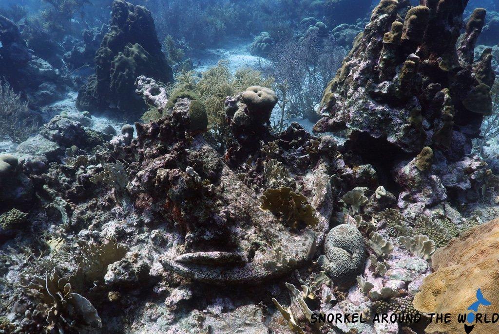 Anchor in the coral - Mangel Halto - Aruba