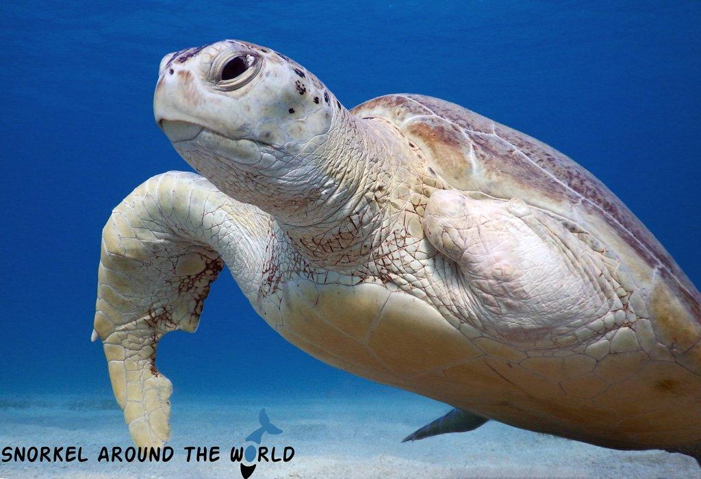 Sea Turtle - Egypt RedSea
