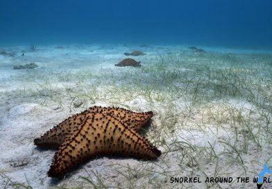 Tres Trapi Aruba - Seastar