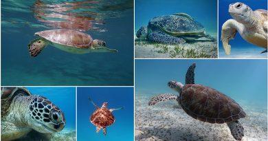 turtle-post-index
