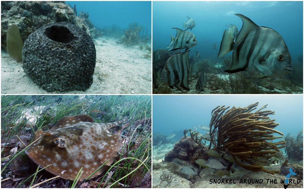 Corals - Puerto Morelos