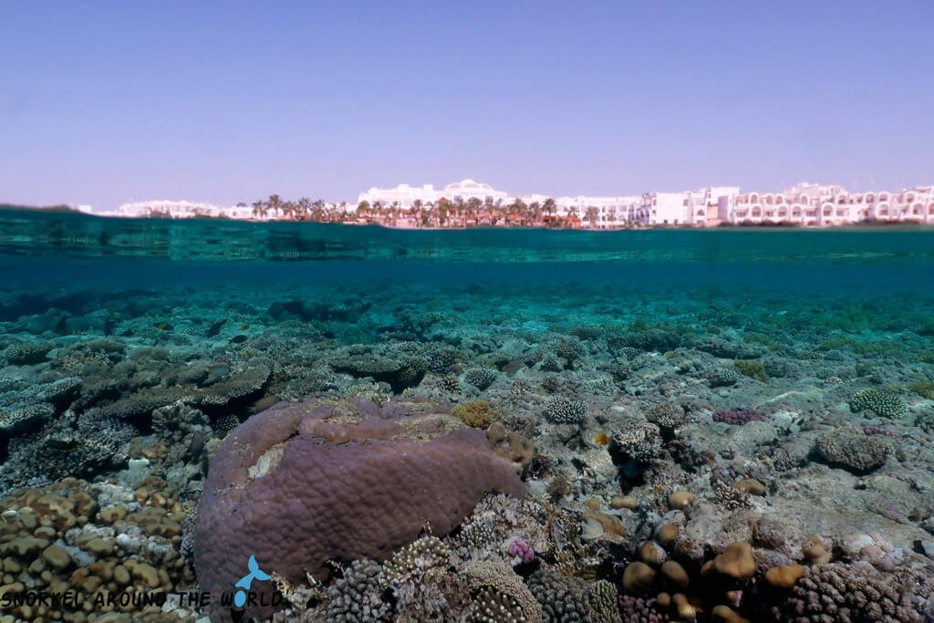 Cyrene Grand Hotel sharm snorkeling