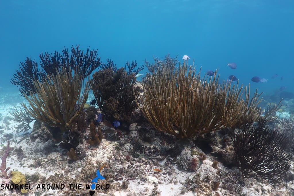 Tulum snorkeling at Tulum reef
