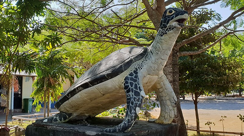 Turtle Conservation Bali