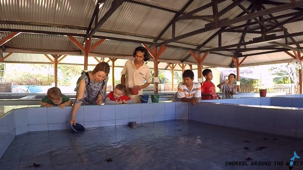 Turtle Conservation Bali - Serangan