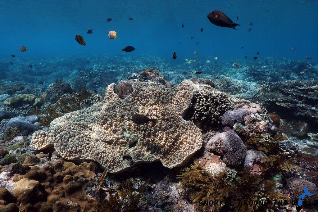Nusa Penida snorkeling spot -  Gamat bay