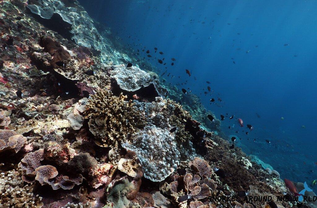 Coral wall Nusa Penida Toyapakeh