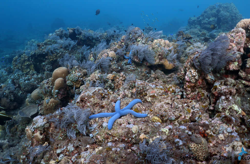 Blue seastar on the sea bottom