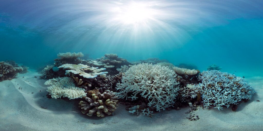 Coral Bleaching Maldives