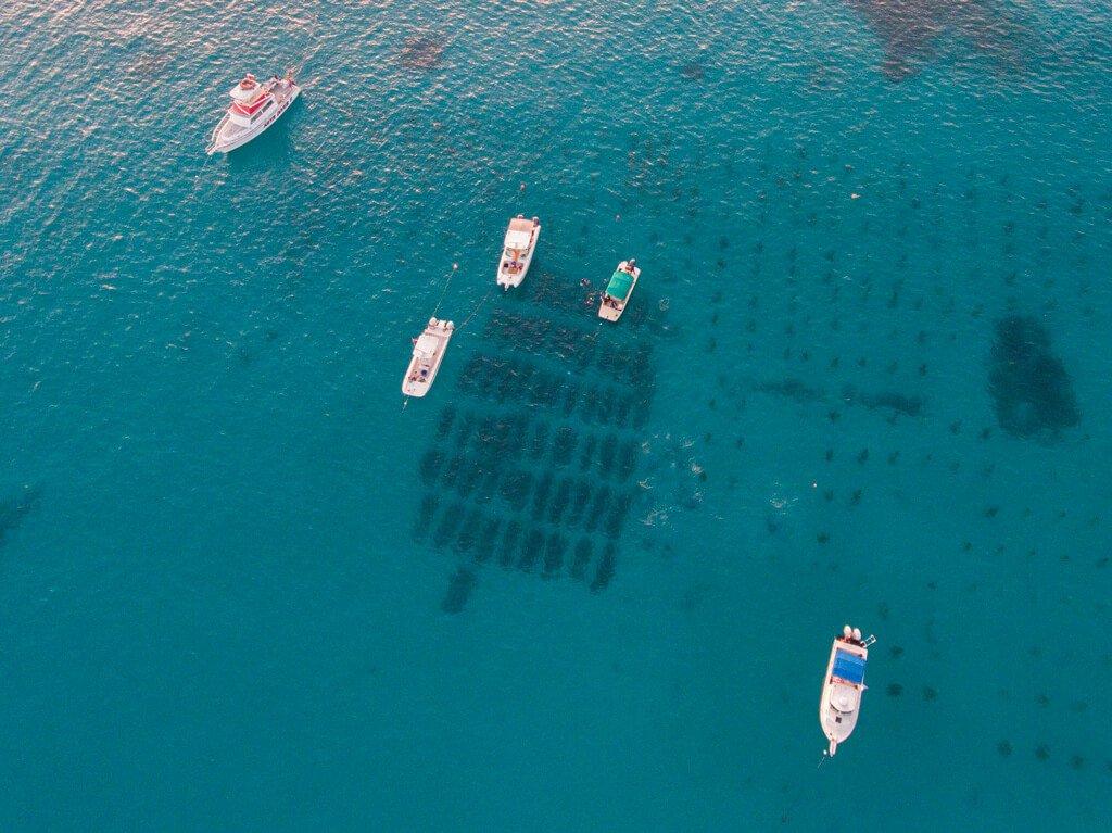 Drone footage coral reef nursery