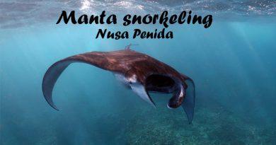 Manta Snorkeling - Bali