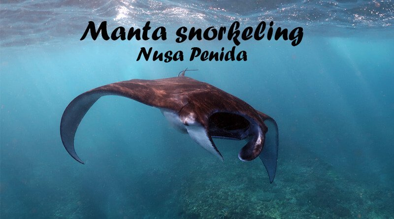 Manta snorkeling Nusa Penida – When? Where? How much?