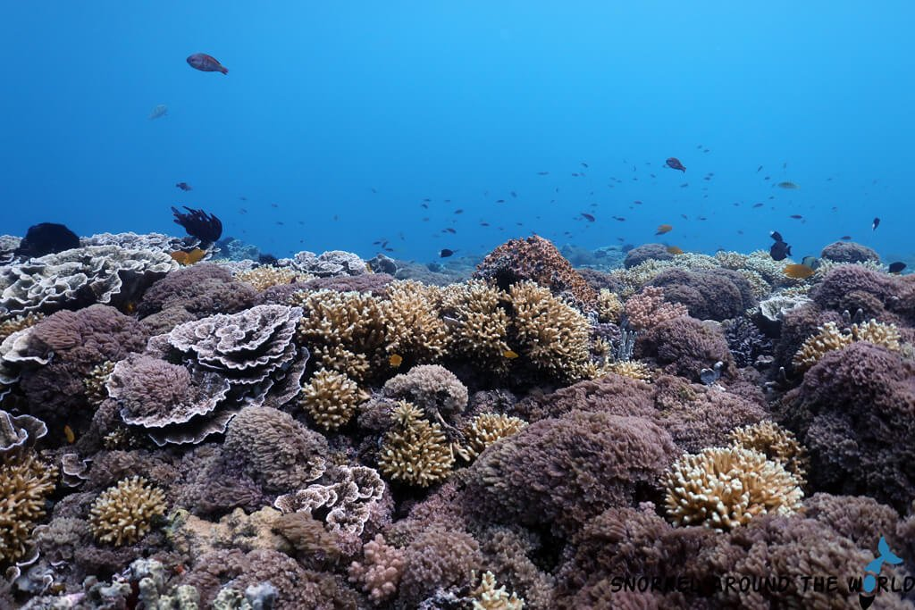 Snorkeling Gili Islands - Gili Air
