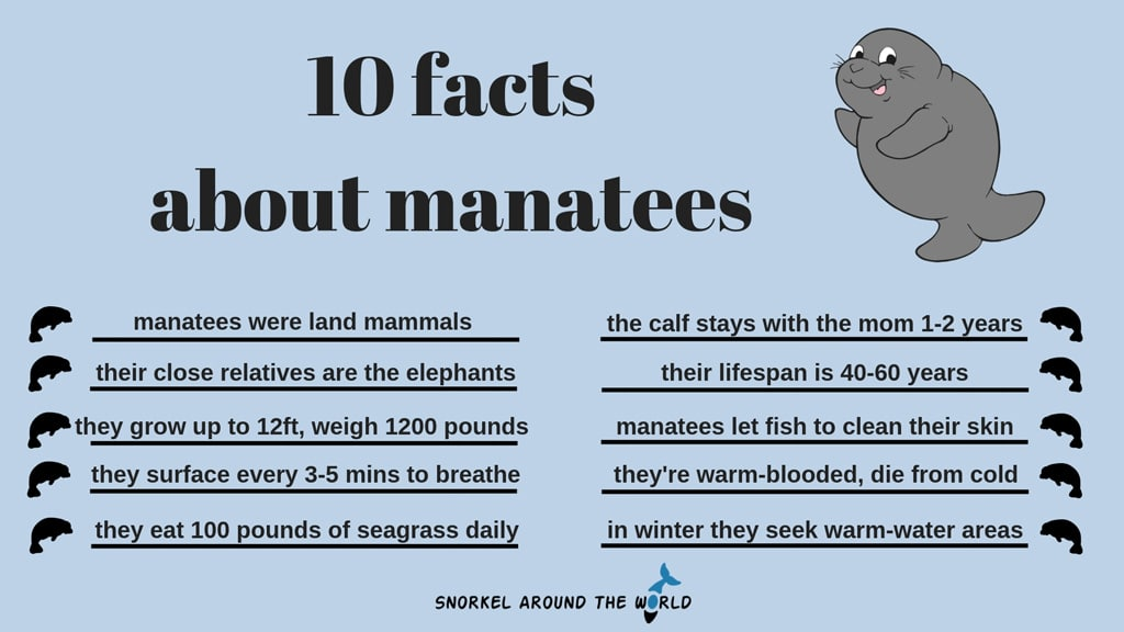 10 facts about manatees