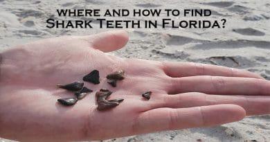 Shark teeth in hand