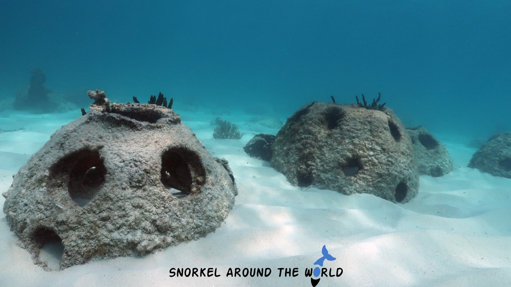 Cemetery beach reef - Cayman Island