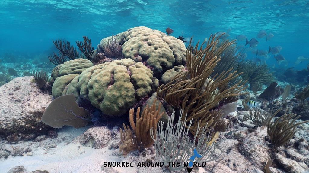 Snorkeling Cayman Kai beach