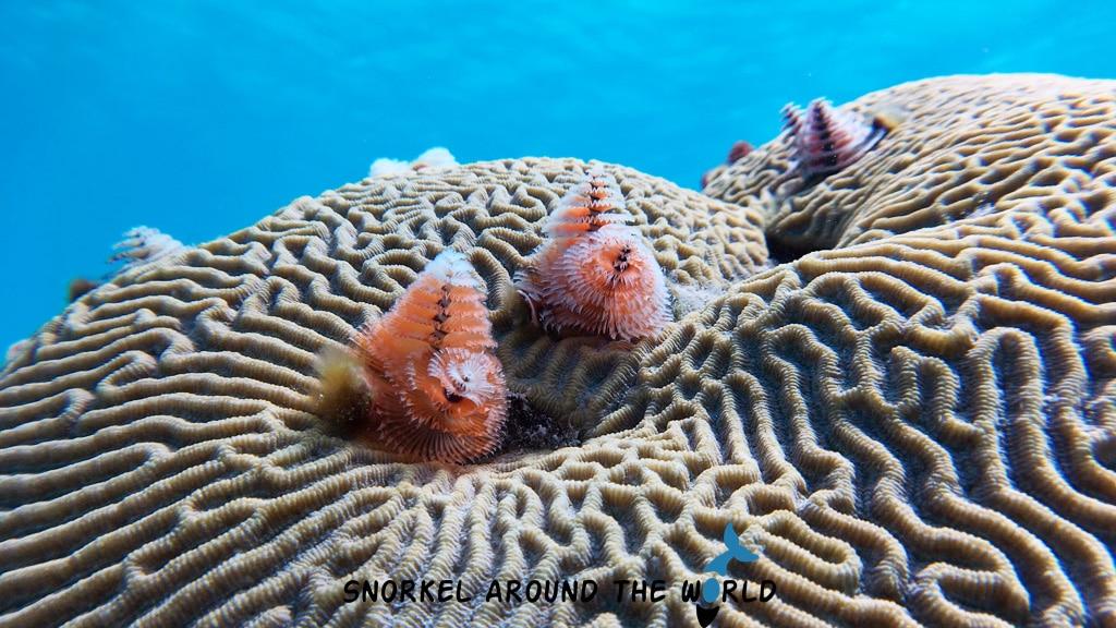 Iphone X underwater image