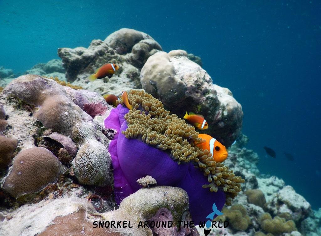 Nikon coolpix underwater photo
