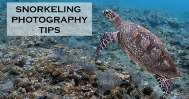 Snorkeling photography tips for the best underwater images