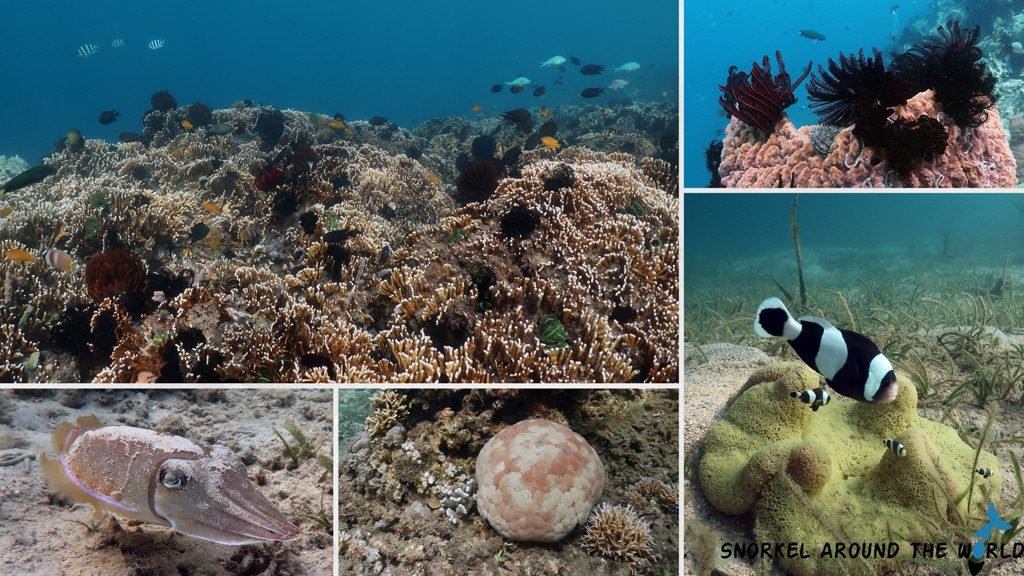 Snorkeling Gili Layar
