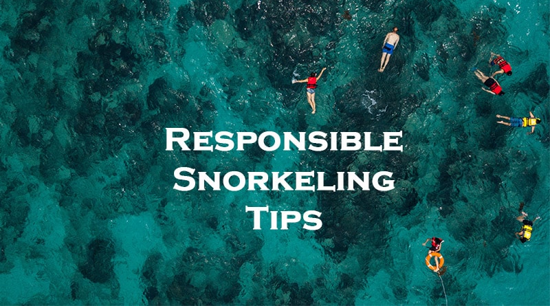 Responsible snorkeling - Snorkelers in the sea