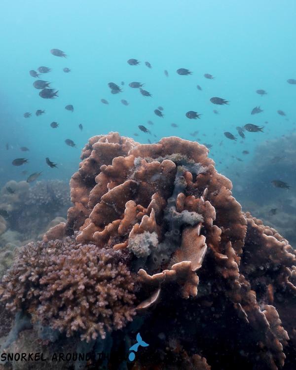 Kohngai snorkeling