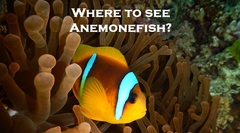 Where can you see clownfish (Nemo) while snorkeling