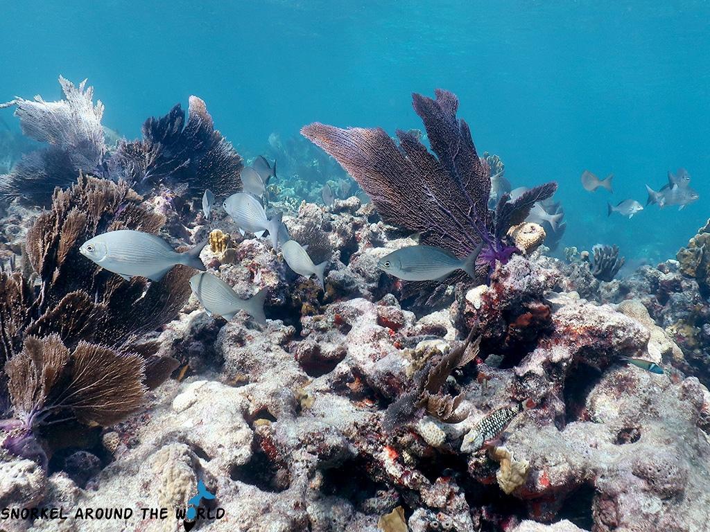 Sand Key coral reef