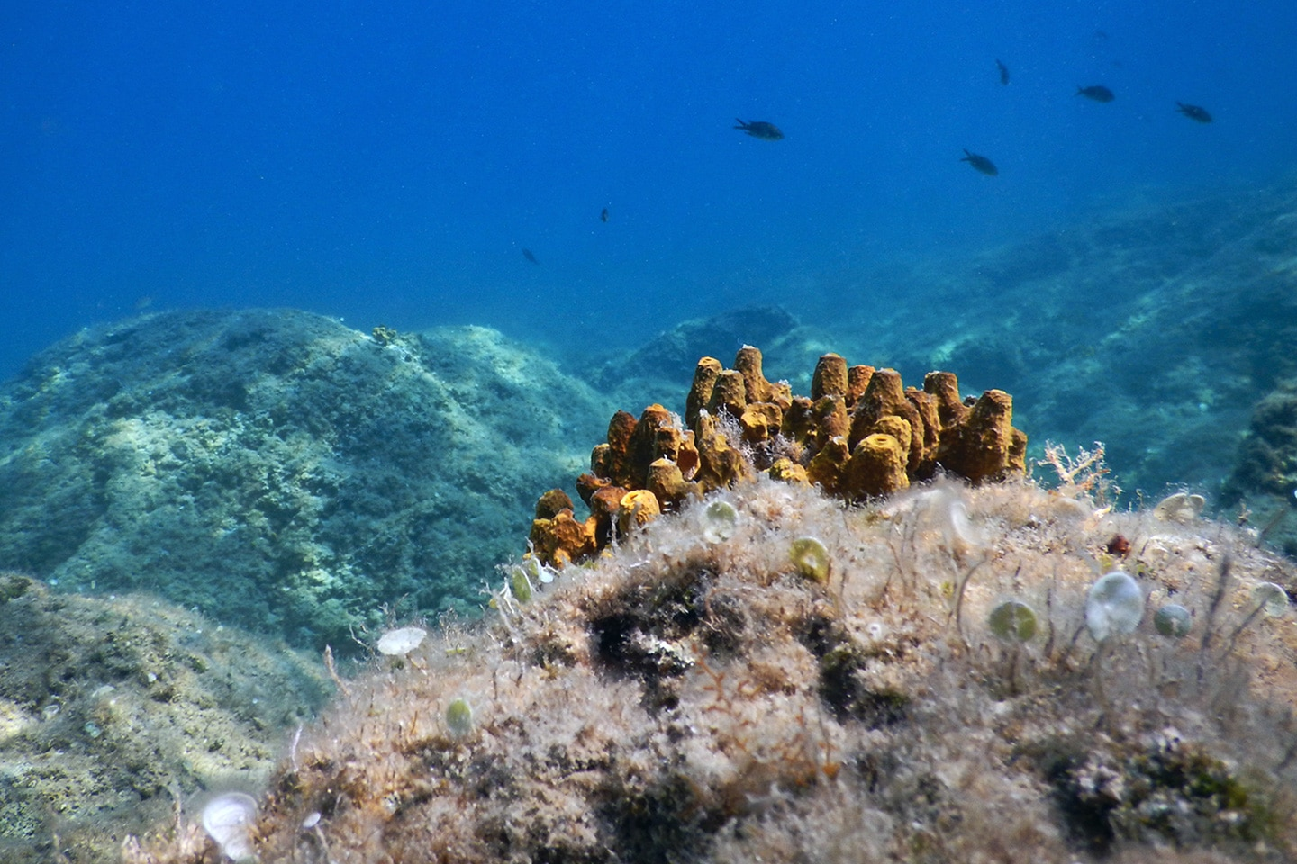 Corals and fish - Krk Island