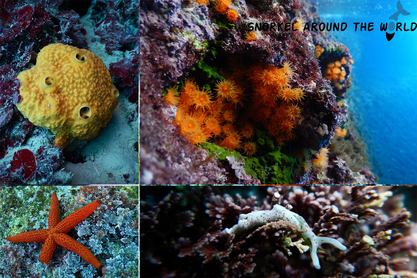 Sea creatures Gozo