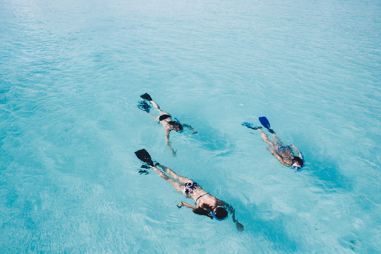 Group of snorkelers