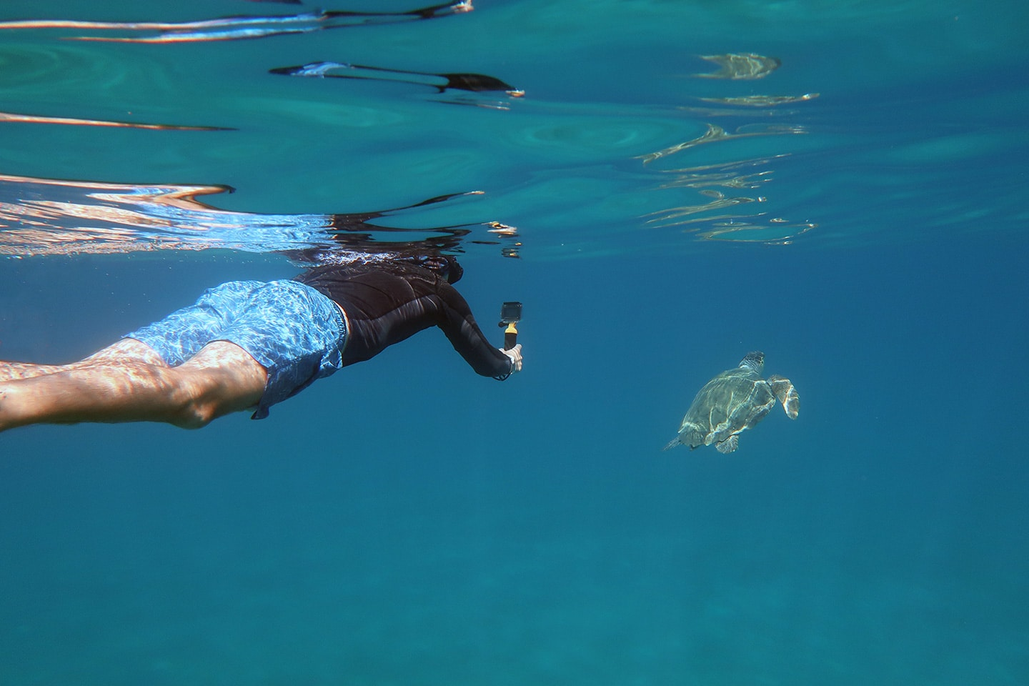 Snorkeler is filming a  turtle