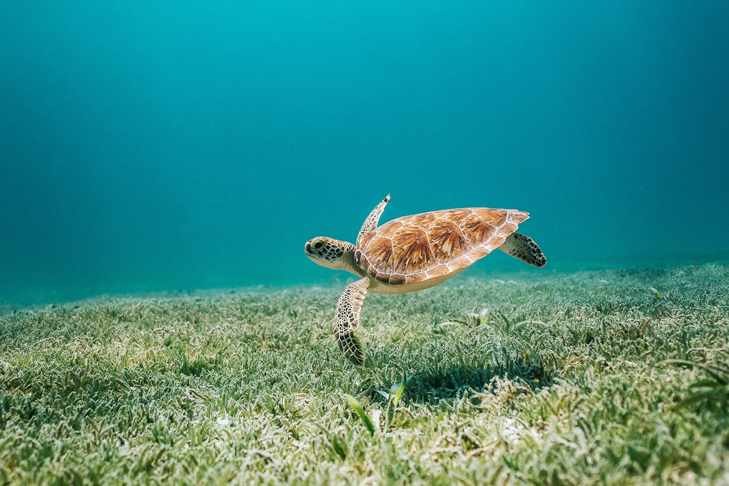 Turtle spotted while snorkeling in Curacao