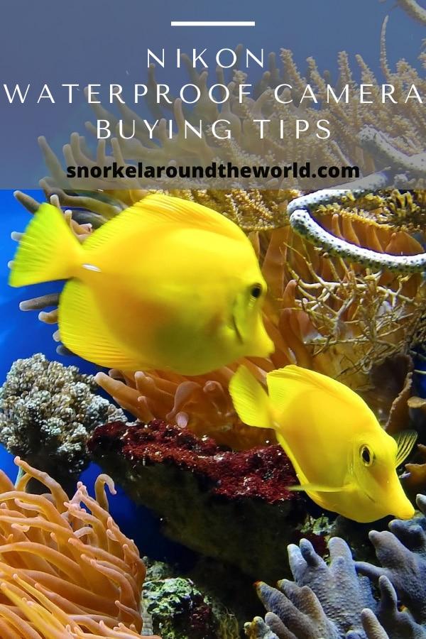 nikon snorkeling camera tips