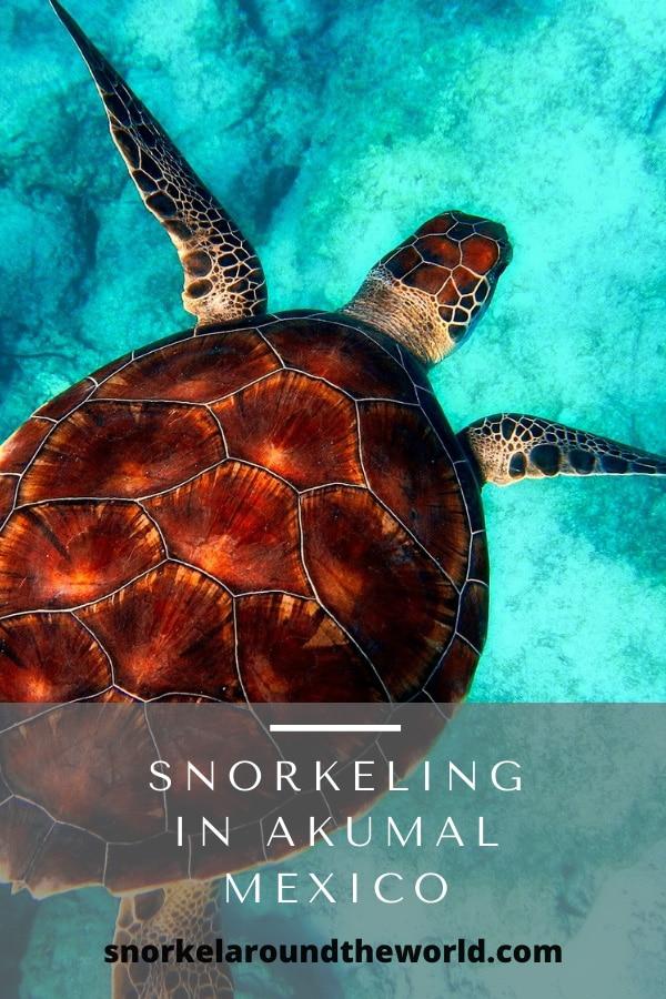 Akumal sea turtle