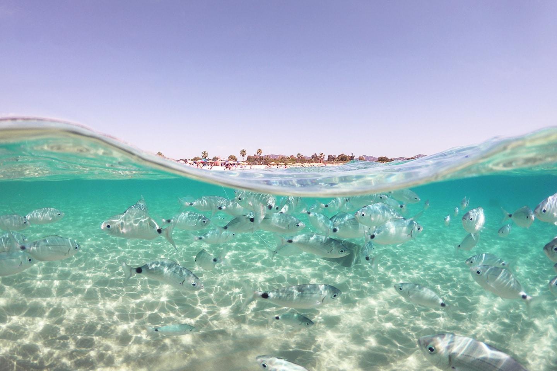 Split shot with GoPro dome port