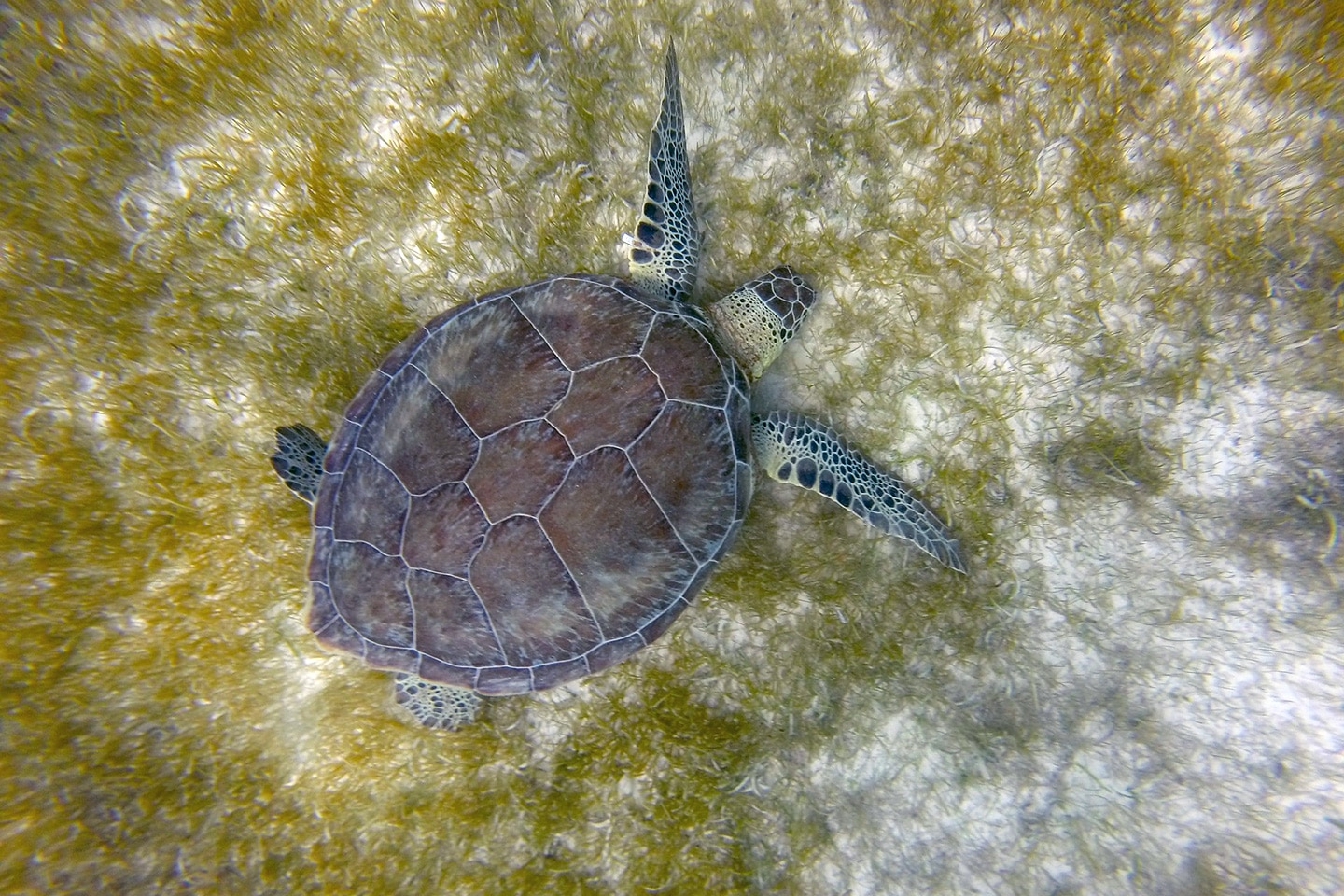 Turtle in Cozumel Mexico