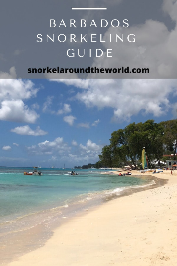 Barbados snorkeling guide pinterest