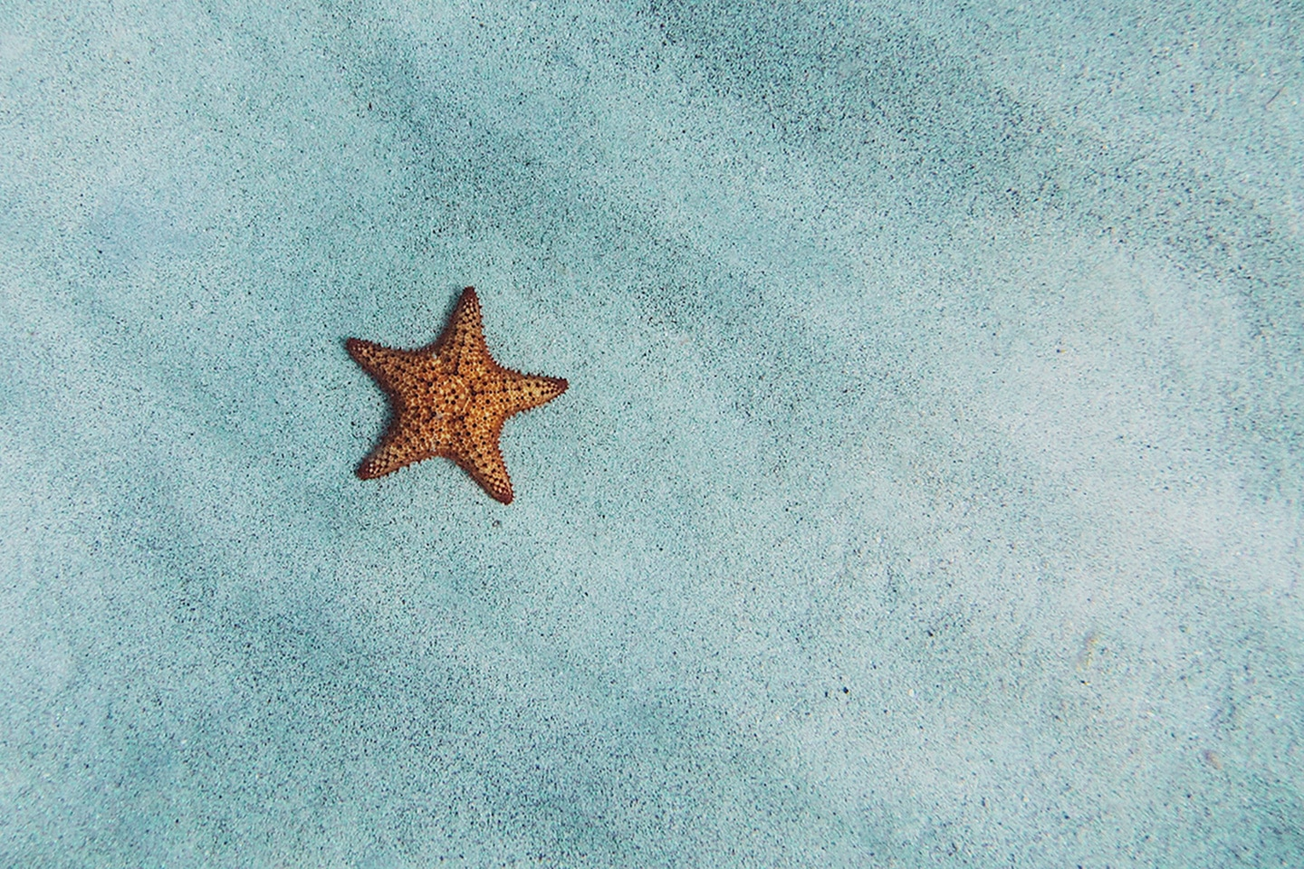 Caribbean Cushion Star