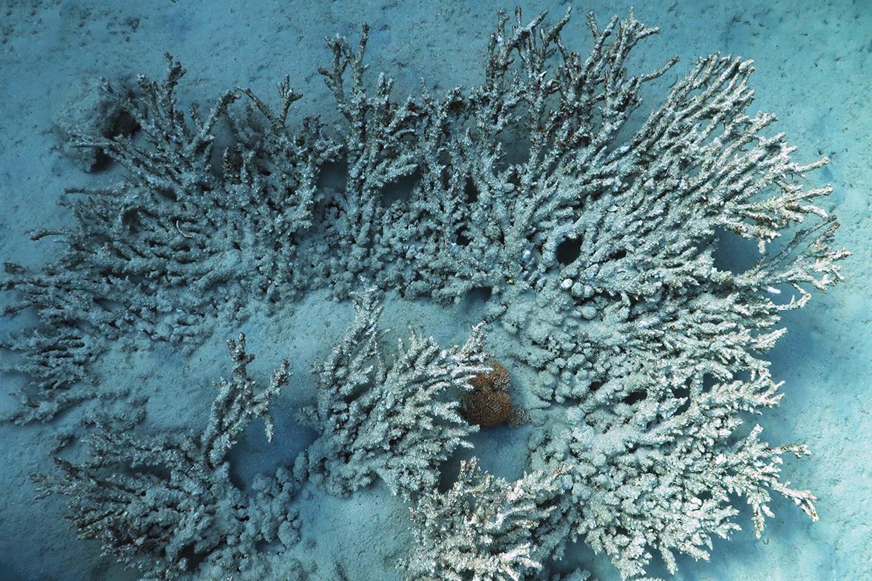 Dead coral in the sea