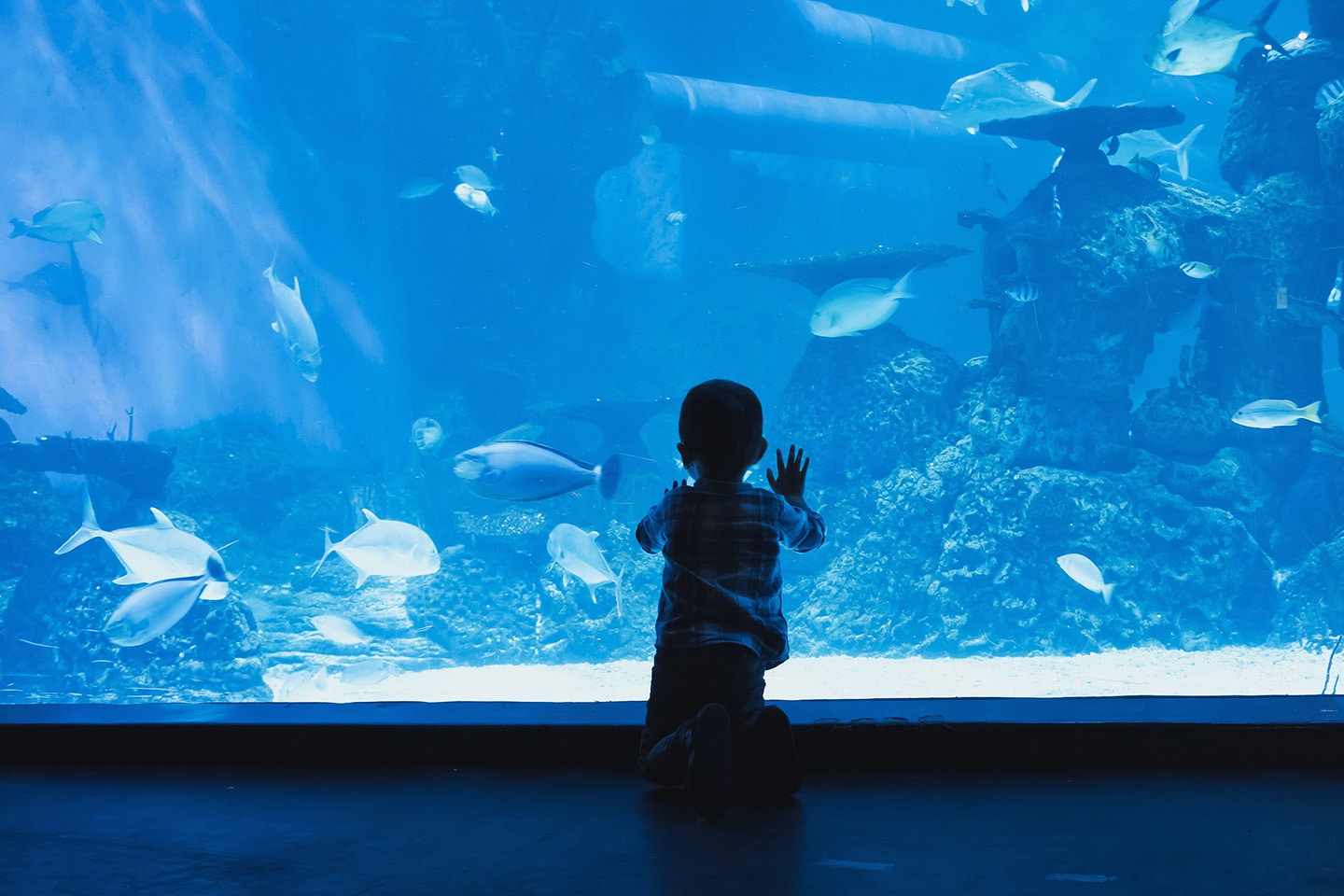 small boy is watching fish in the aquarium