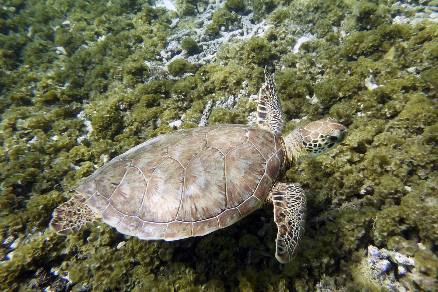 Turtle in Guadeloupe
