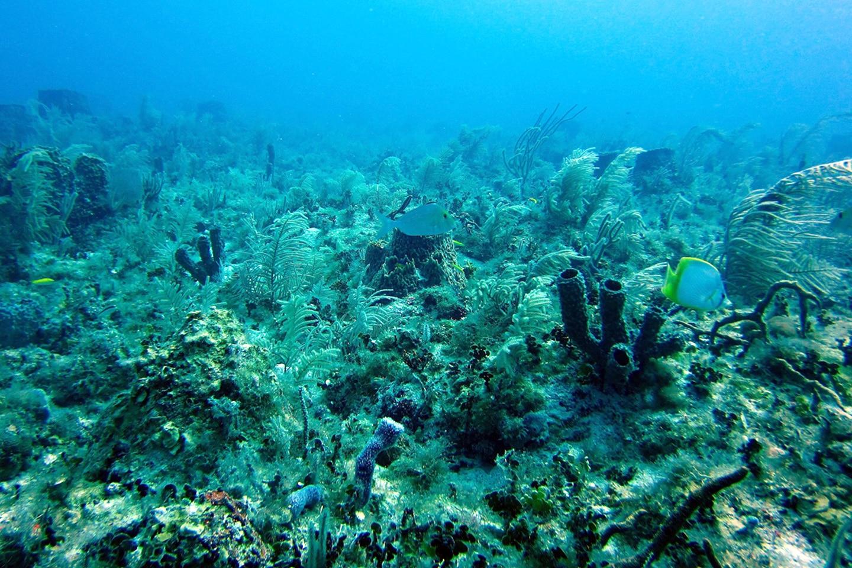 Corals and fish - Karpata reef