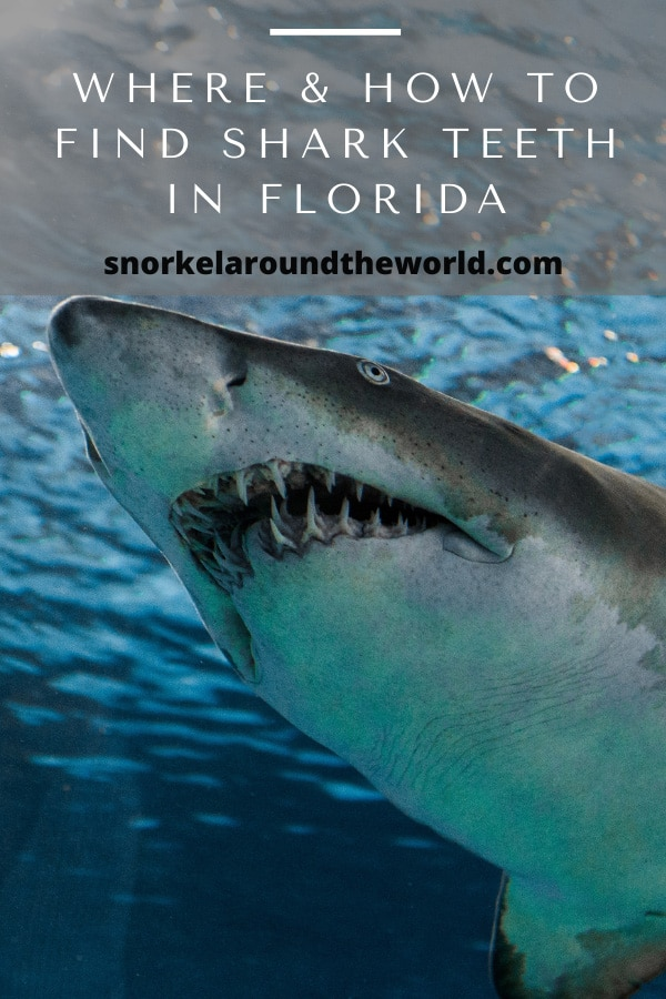 where to find shark teeth in Florida