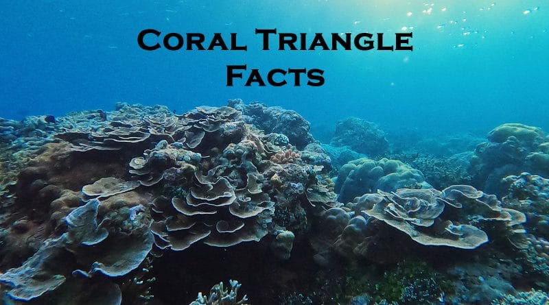 Coral triangle facts