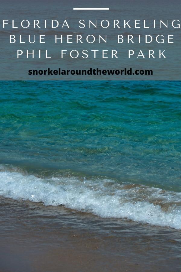Florida Blue Heron Bridge snorkeling