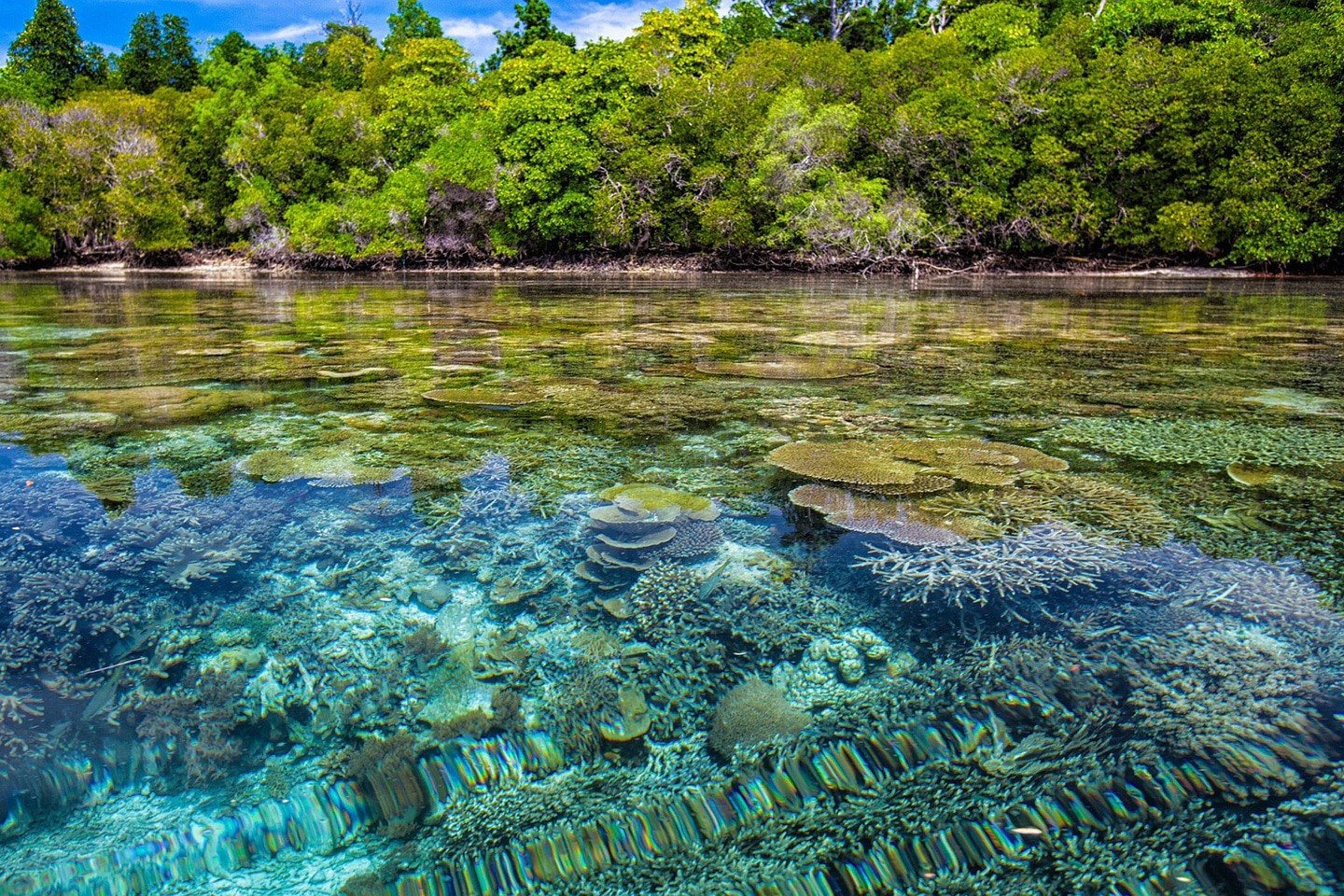 Shallow coral reef in the coral triangle