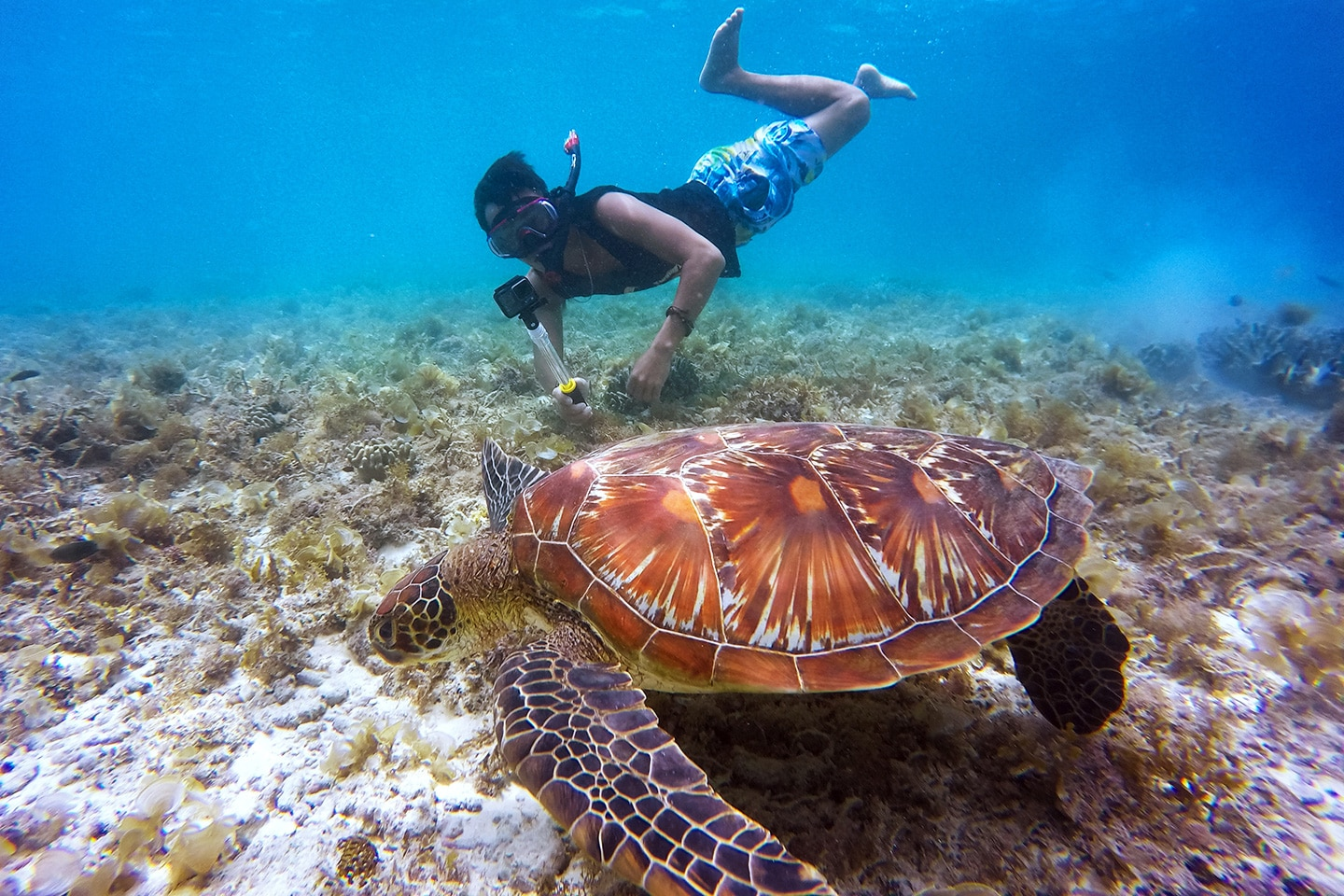 snorkeler is taking photos of a turtle with a selfie stick